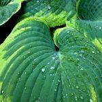 雨の庭、音の庭