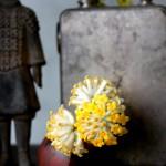 早春の黄色
