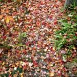 つかの間の紅葉